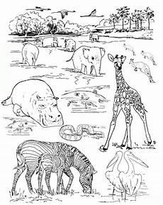 malvorlagen im zoo malvorlagen ausmalen bilder