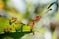 ameisen im garten ameisen in haus und garten pineca de