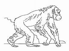 ape coloring pages kidsuki