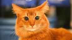 Geheimes Katzen Kartell Mietze Bringt Drogen Nach Hause