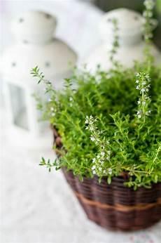 zimmerpflanzen arten bilder den beliebtesten