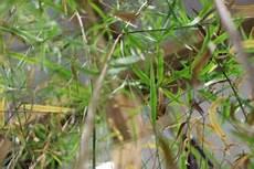 Welche Pflanze Produziert Am Meisten Sauerstoff - welche pflanzen geh 246 ren ins b 252 ro m 246 belfan