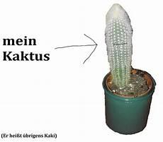 wie oft kaktus gießen wie oft muss ich kaktus gie 223 en wasser pflanzen pflege