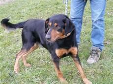 spa poitiers chien urgence vitale pour chiens en surnombre spa de poitiers