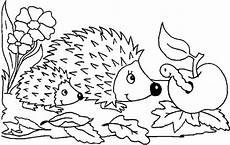 hedgehogs free colouring pages