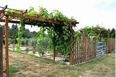 pergola pour vigne