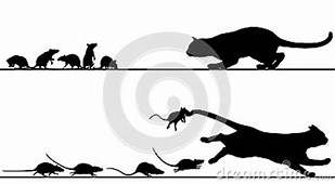 Rats Chasing Cat Royalty Free Stock Images  Image 30512739