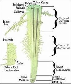 Biosfer Struktur Dan Fungsi Tumbuhan