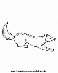 Kostenlose Ausmalbilder Zum Ausdrucken Fuchs Kostenlose Ausmalbilder Ausmalbild Fuchs 4