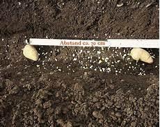 april 2003 01 kartoffeln pflanzen