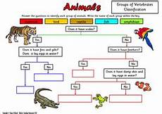 animal worksheets doc 13833 animal classification sorting activity and worksheets