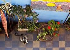 giftige zimmerpflanzen f 252 r katzen welche giftpflanzen