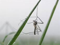 schnake im zimmer spinne liegt neben toter spinne tot