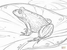 Ausmalbild Frosch Am Teich Ausmalbild Teichfrosch Ausmalbilder Kostenlos Zum