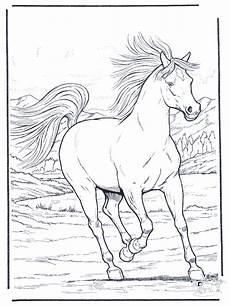 pferd in galopp ausmalbilder pferde