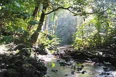 Hutan Lindung Di Sulawesi Jadi Sasaran Konversi Lahan