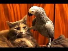 Lustige Bilder - witzige katzen zum totlachen lustig