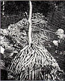 Lauge Zum Bleichen Textilien - v kapitel das leben der fronbauern