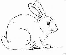 kaninchen ausmalbild malvorlage sonstiges