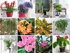 plante d int 233 rieur les 30 plus les belles plantes dans