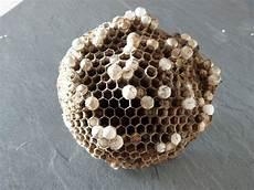 petit nid de guepe petit nid de guepe id 233 es d 233 coration id 233 es d 233 coration