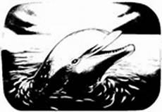 Malvorlagen Morningkids Malvorlagen Delfin Morning