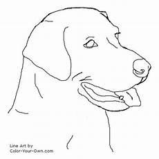 labrador retriever headstudy line patterns