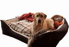 divanetti per cani cuccia divano per cani taglia grande arredo e