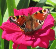 Schmetterling Auf Der Blume Schmetterling Blumen Natur
