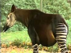 les animaux en voie de disparition arte animaux en voie de disparition