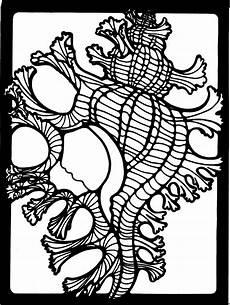 Muschel Ausmalbilder Malvorlagen Muschel 5 Ausmalbild Malvorlage Tiere