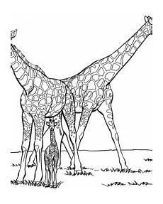 giraffe malvorlagen gratis zum ausdrucken