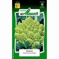 blumenkohl pflanzen abstand blumenkohl romanesco 10211804 samen kaufen auf