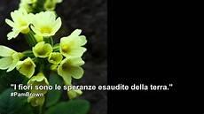 frasi i fiori le parole dei fiori