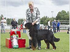Dalarnas Kennelklubbs nationella hundutställning 2011