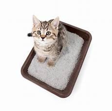 191 c 243 mo limpiar la caja de arena de tu gato univision
