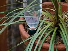 comment arroser ses plantes pendant les vacances arroser les plantes pendant les vacances astuces