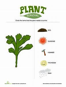 how plants grow lesson plan education com lesson