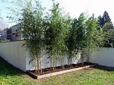 Plantations De Bambous Chartier L Du Paysage