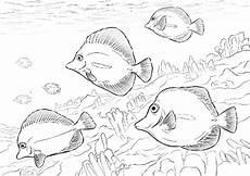 ausmalbilder baby fische kostenlos zum ausdrucken