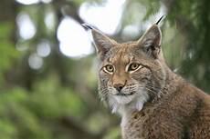 Le Lynx Comparateur Assurance Auto Le Lynx Premier