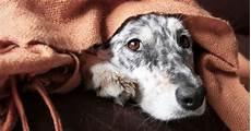 ist mein hund erk 228 ltet symptome medikamente hausmittel