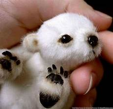 20 of the cutest baby animals that will fit in your