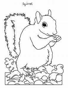 coloring pages of nature and animals 16380 backyard animals and nature coloring books free coloring pages squirrel coloring books and