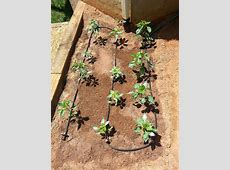 DIY Soaker Hose Irrigation ? Deeply Rooted