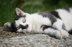 5 effektive tipps um katzen aus dem garten zu vertreiben