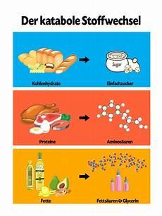 was bedeutet synthese ᐅ stoffwechsel was ist das