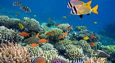 Indahnya Taman Laut Perairan Meko Flores Timur Okezone