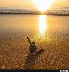 Malvorlagen Unterwasser Tiere Lustig Sommer Ich Komme Lustige Bilder Spr 252 Che Witze Echt