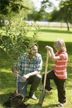 quand planter des arbustes homme avec fils entrant de planter un arbre